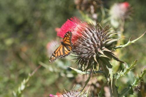 Biosfera Mariposa Monarca - Mexico