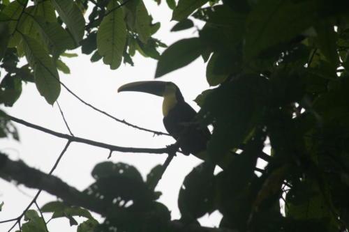 Corcovado 26 Costa Rica
