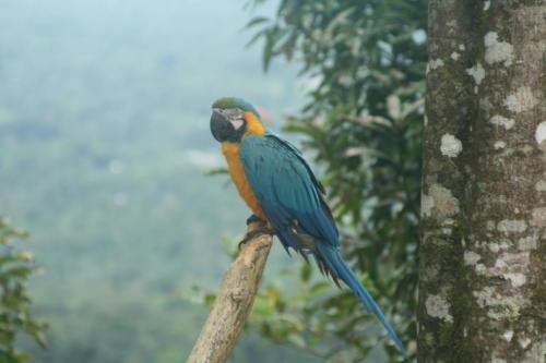 Laguna Azul- Equateur